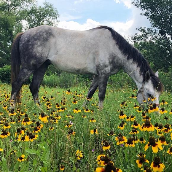 cowgirlsstyle
